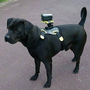 cane nero con una imbracatura con attacco cam go pro