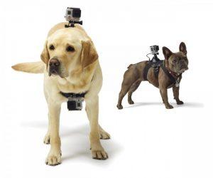 pettorina gopro per cani