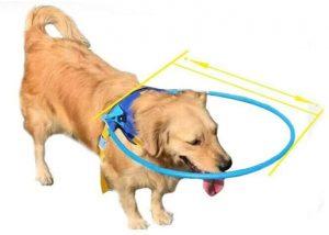 pettorina per cani ciechi, non vedenti
