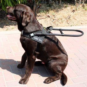 Pettorina per cani usi speciali: traino, cani guida e levrieri