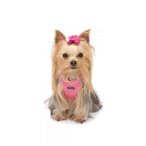 Pettorina per cani di piccola taglia guida alla scelta for Marsupio per cani di piccola taglia